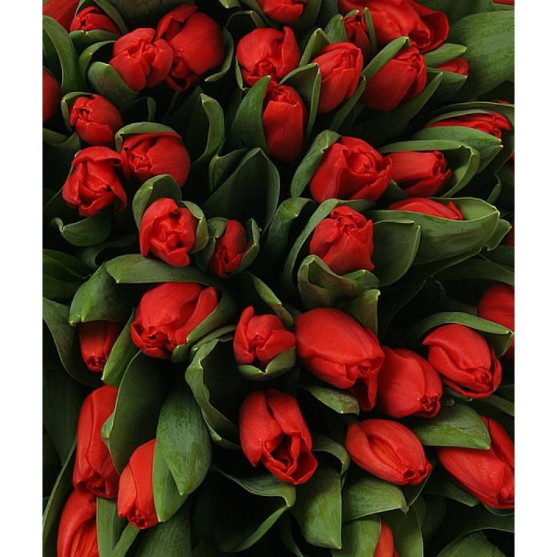 Цветочная композиция из красных тюльпанов
