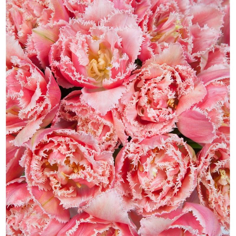 Букет из Тюльпанов Queensland