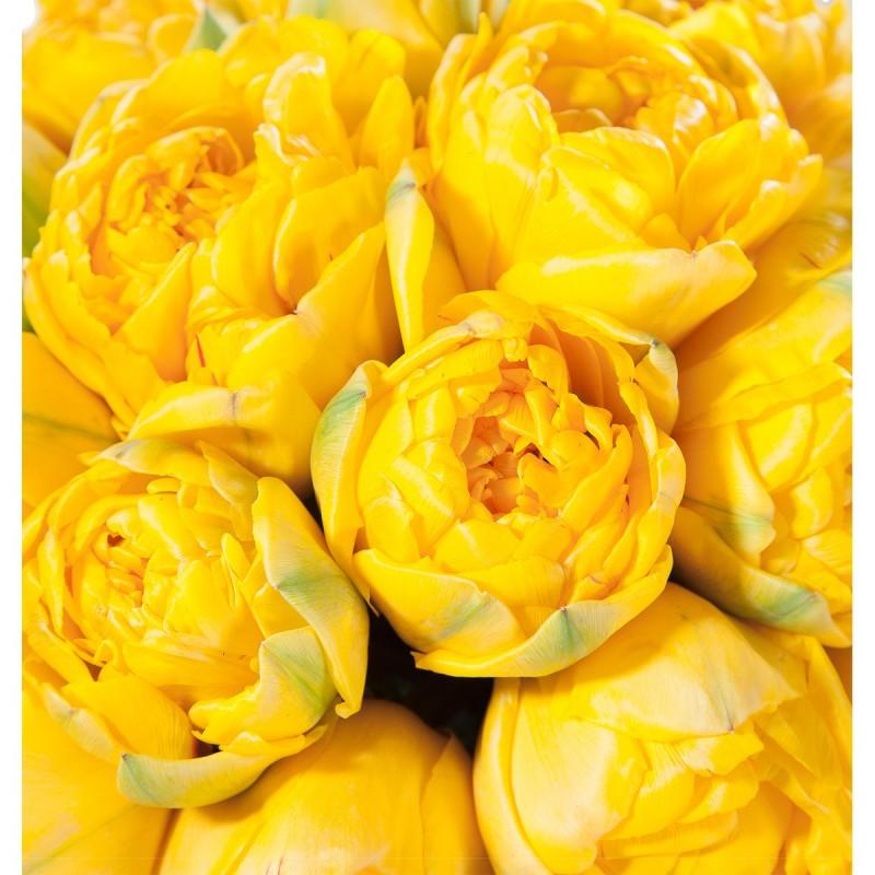 Букет из Тюльпанов Yellou Pompenett