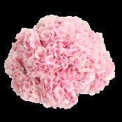 Розовые (6)