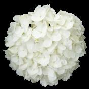 Белые  (4)