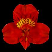 Красные (3)