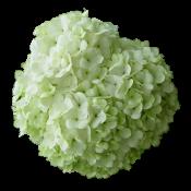 Зеленые  (5)