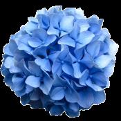 Синие  (3)