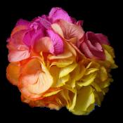 Разноцветные  (2)