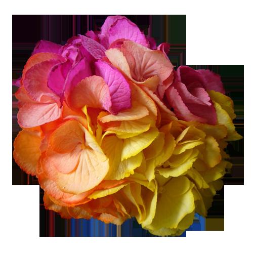 Разноцветные