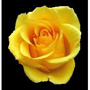 Желтые (7)
