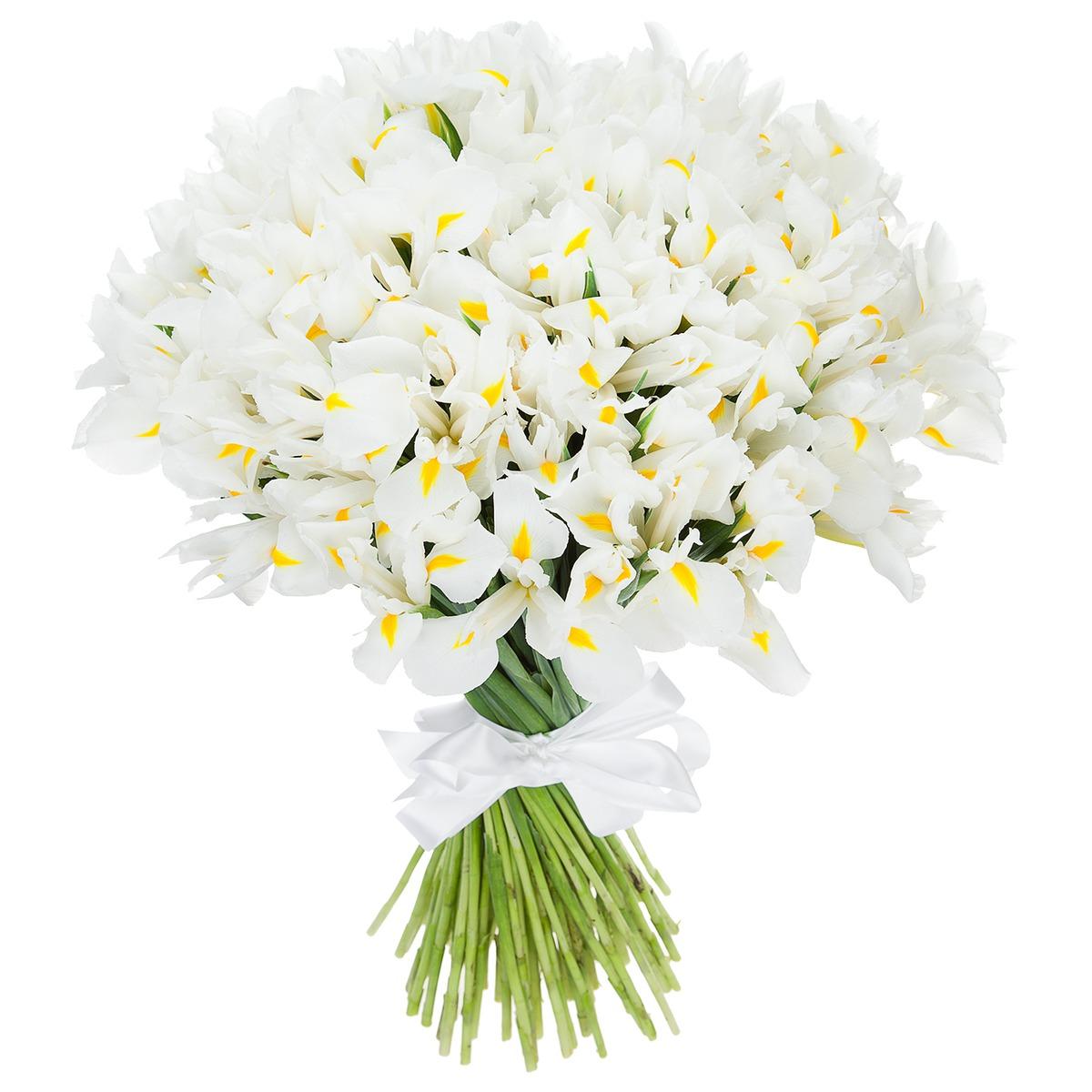 http://flower-world.com.ua/image/data/Flowers/Iris/b13.jpg